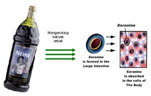 proses xeronine